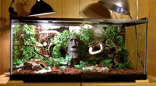 A display setup can be very attractive and is ideal for a pet Ball Python.